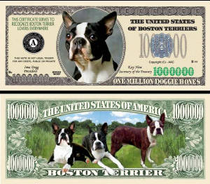 BostonTerrierDogTJ6.jpg